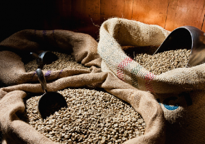 Peruvian-Terra-Nera-Coffee-Beans